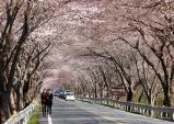 하동군, 화개장터 벚꽃축제 내달 7∼8일 개최